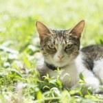 Cat in grass — Stock Photo