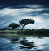 Windblown tree — Stock Photo