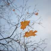 Autumn tree leaves — Stock Photo