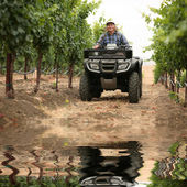 Farmer in vineyard — Stock Photo