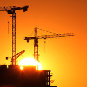 Cranes at sunrise — Stock Photo