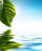 Leaf Over Water — Stock Photo
