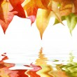 Red and yellow autumn leaves  — Stock Photo