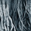 Dark background of tree roots — Stock Photo