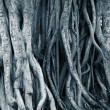 Stock Photo: Dark background of tree roots