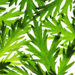 Floral background of green leaves  — Stock Photo