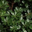 Stock Photo: Green leaves background
