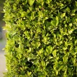 Green fence background — 图库照片
