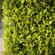 Green fence background — Stock Photo