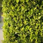 gröna staket bakgrund — Stockfoto