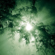 Rays of light shining through tree branches — Stock Photo