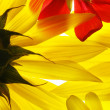 Yellow and red summer flowers — Stock Photo