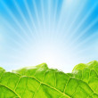 Foto de Stock  : Fresh greenery with rays of sun