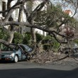 Stock Photo: Car trapped under fallen tree