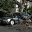 Car trapped under fallen tree — Stock Photo