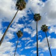 High palm trees — Stockfoto