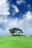 Tree in a green field landscape — Stock Photo