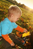 Little boy playing with yellow autumn leaves — Stock fotografie