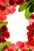 Red Floral Frame — Stock Photo