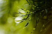 Greenery — Stock fotografie