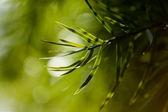绿化 — 图库照片
