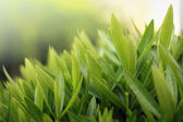 Greenery — Stock Photo