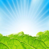 Fresh greenery with rays of sun — Stock Photo