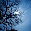 Bare Tree Head Against Blue Sky — Stock Photo