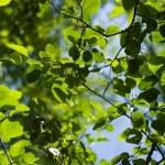 Beautiful Foliage Background — Stock Photo