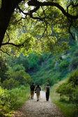 Hiking scene — Stock Photo