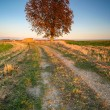 Large tree in the field — Stock Photo #32335407