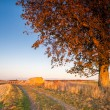 Large tree in the field — Stock Photo