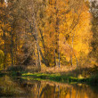 River and forest in autumn — Stockfoto