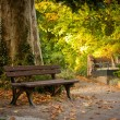 Park bench near a huge tree — Stock Photo