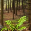 Fern growing in a forest — Stock Photo
