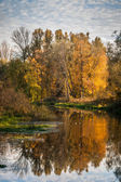 River and forest in autumn — Stock Photo