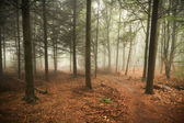 Spooky forest — Stock Photo