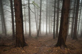 Forest covered in fog — Stock Photo