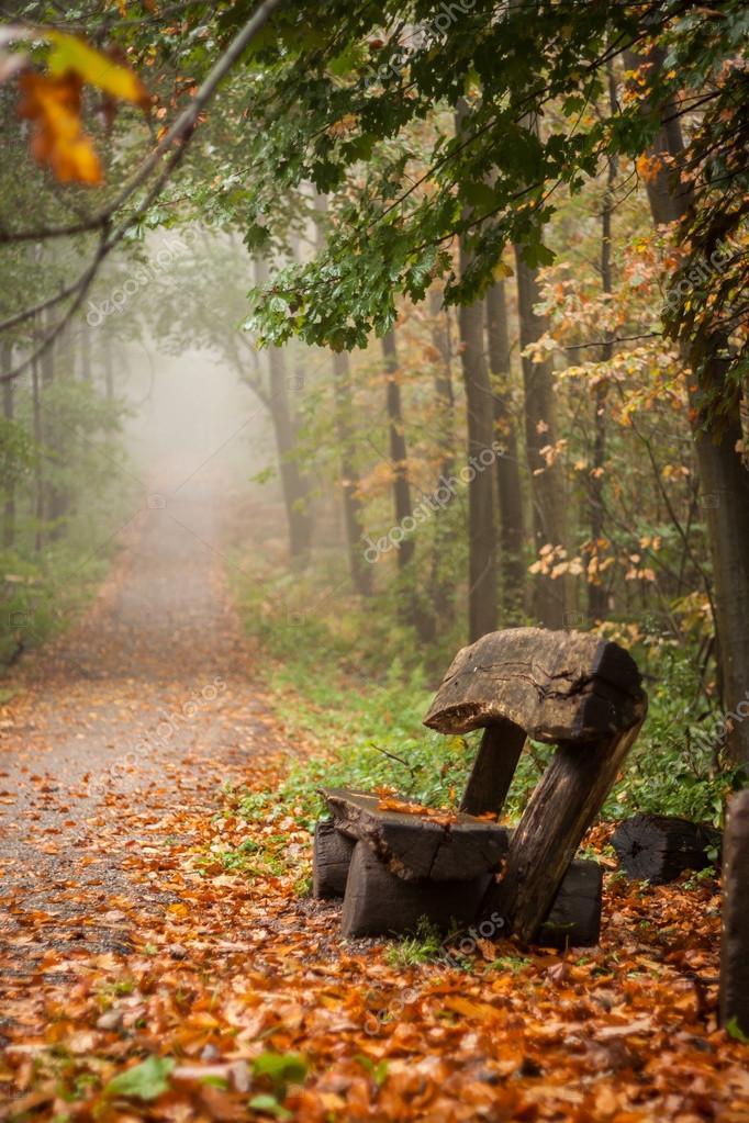 在一个有雾的秋天森林的长凳上的垂直镜头– 图库图片