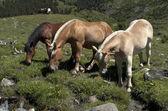 Hästar. landskap — Stockfoto