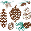 Pinecone Collection — Stock Vector