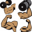 Weightlifter Arms — Stock Vector