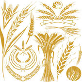 Wheat Collection — Stock Vector