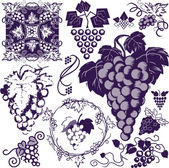 Grapes Collection — Stock Vector