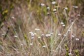 Follaje en campos secos en el Parque Nacional serra da canastra - minas — Foto de Stock
