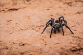 Spider walking at dirt road — Stock Photo