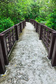 Walkway in the mangrove forest — Stock Photo