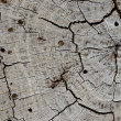 Stock Photo: Texture of old stump