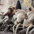 Monkey family — Stockfoto