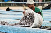 Workers dry salted fishs — Stock Photo